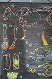 Franse schoolplaat_